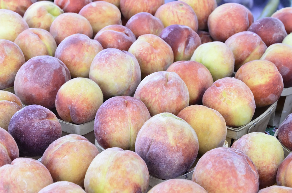 Peaches (binomial name Prunus persica) from southern Illinois on display at farmer's market in northern Illinois near the end of August (selective focus)