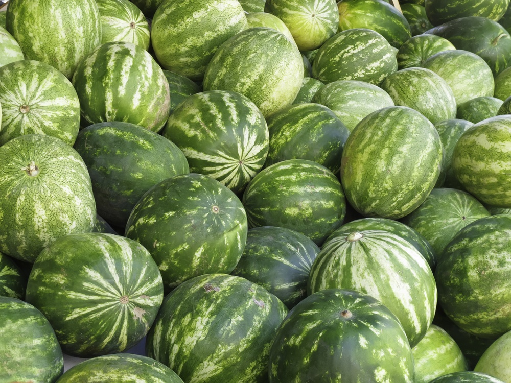 Watermelons (botanical name Citrullus lanatus) in abundance at outdoor farmers' market in Sarasota, Florida
